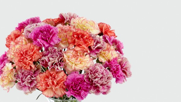 Sweet Carnations Bouquet - Image 3 Of 4
