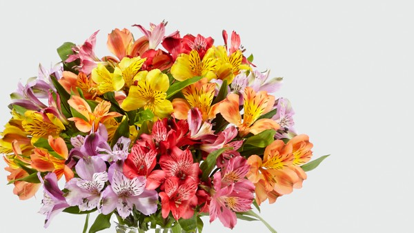 Rainbow Discovery Peruvian Lily Bouquet - 50 Blooms - VASE INCLUDED - Image 3 Of 4