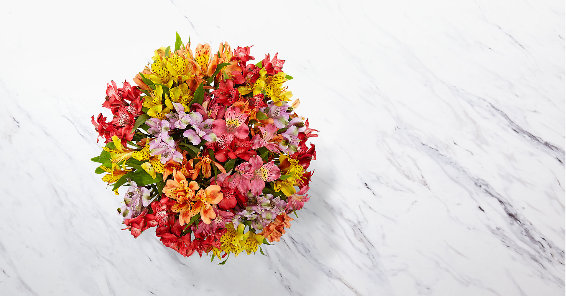 Rainbow Discovery Peruvian Lily Bouquet - 100 Blooms - No Vase - Image 2 Of 3