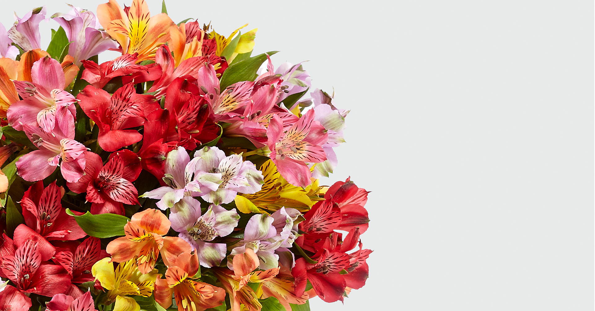 Rainbow Discovery Peruvian Lily Bouquet - Image 4 Of 5