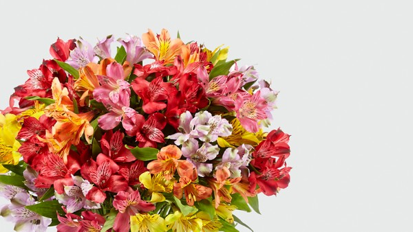 Rainbow Discovery Peruvian Lily Bouquet - Thumbnail 3 Of 4