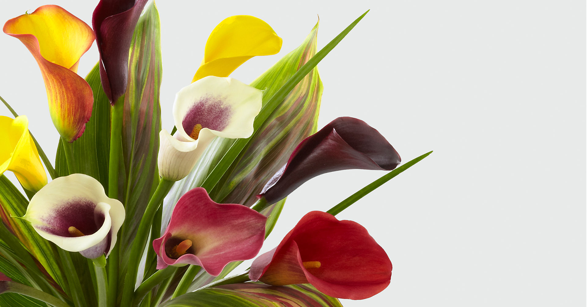 Captured Color Calla Lily Bouquet - 12 stems - VASE INCLUDED - Image 3 Of 3