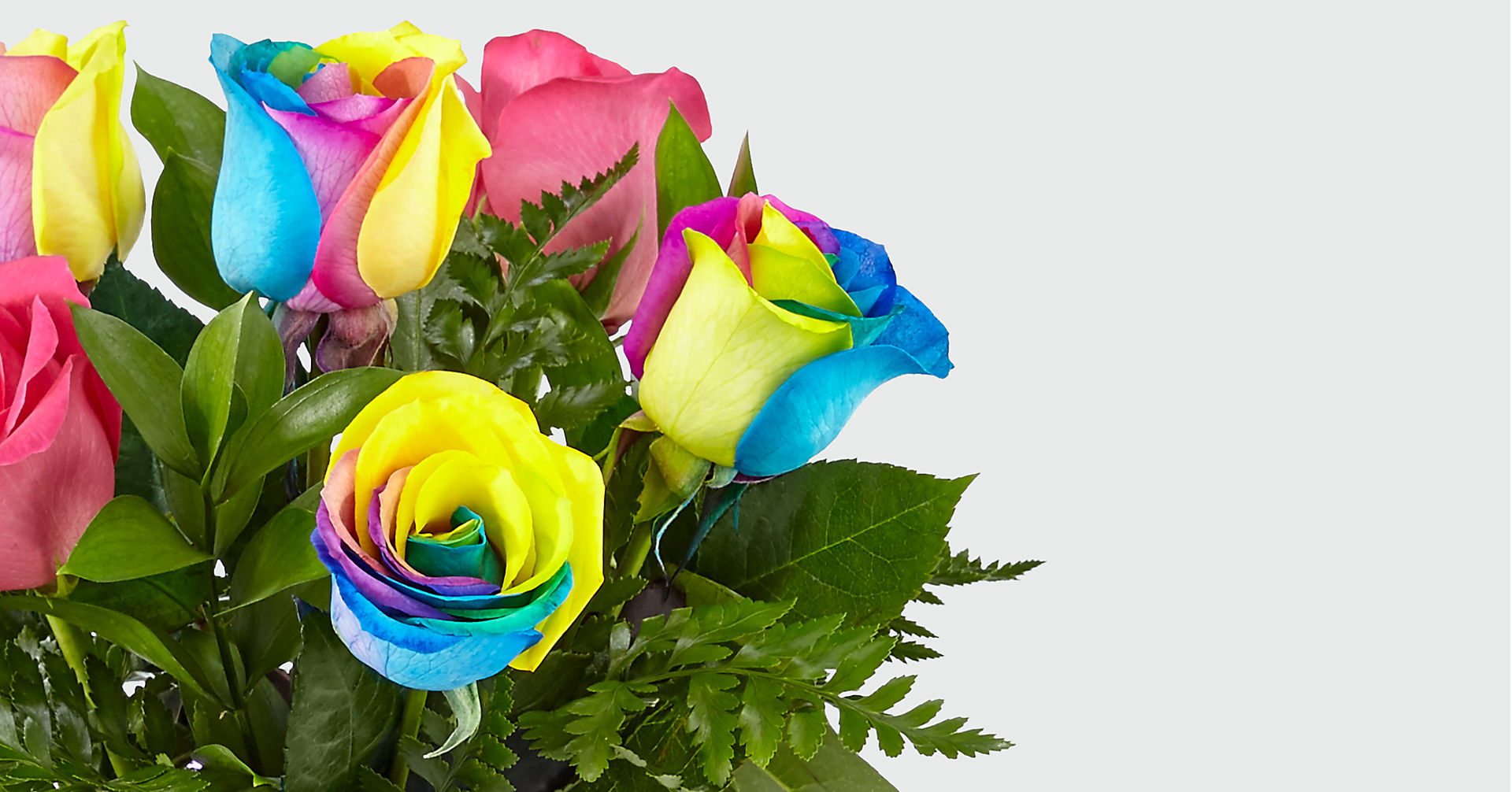Time to Celebrate Rainbow Rose Bouquet - 6 Stems - VASE INCLUDED - Image 4 Of 5