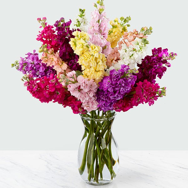 Wistful Wishes Gilliflower Bouquet - 15 Stems - VASE INCLUDED