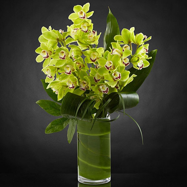 Vision Luxury Orchid Bouquet - 8 Stems