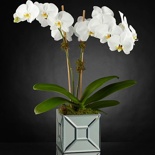 Elegant Impressions™ Luxury Orchid - Image 1 Of 2