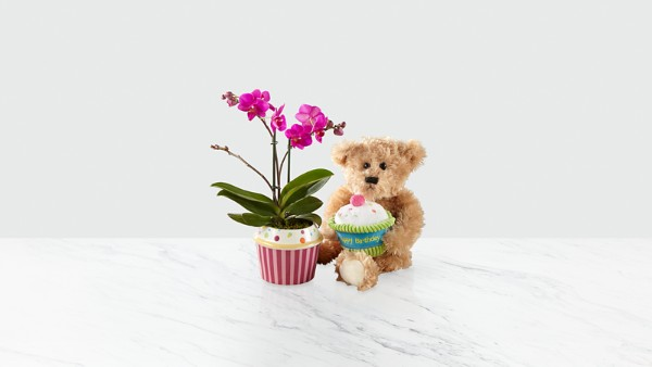 Sweet Celebrations Birthday Orchid with Plush Bear