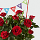 Thankful Moments Mini Rose Plant - Thumbnail 2 Of 2