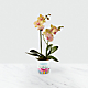 Sweet Celebrations Birthday Orchid - Thumbnail 1 Of 2