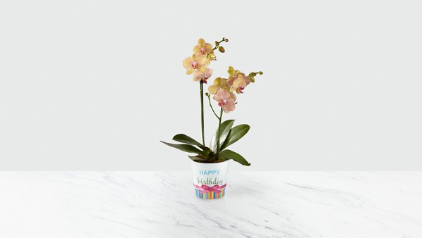 Sweet Celebrations Birthday Orchid - Image 1 Of 2