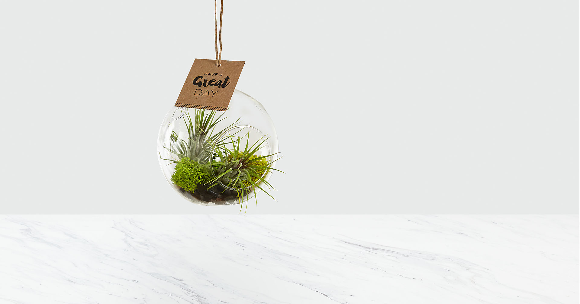 Just for You Hanging Air Plant - Image 1 Of 2
