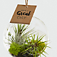 Just for You Hanging Air Plant - Thumbnail 2 Of 2
