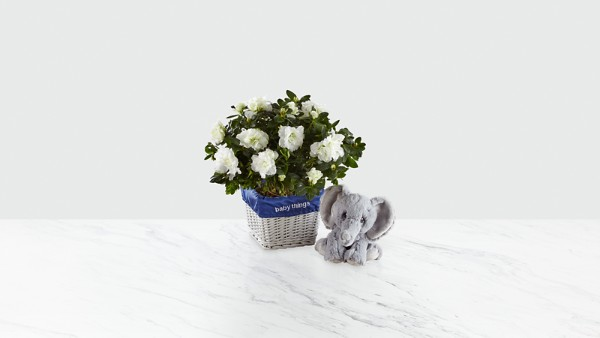 Baby Things Azalea with Plush Precious Moments® Elephant - Boy