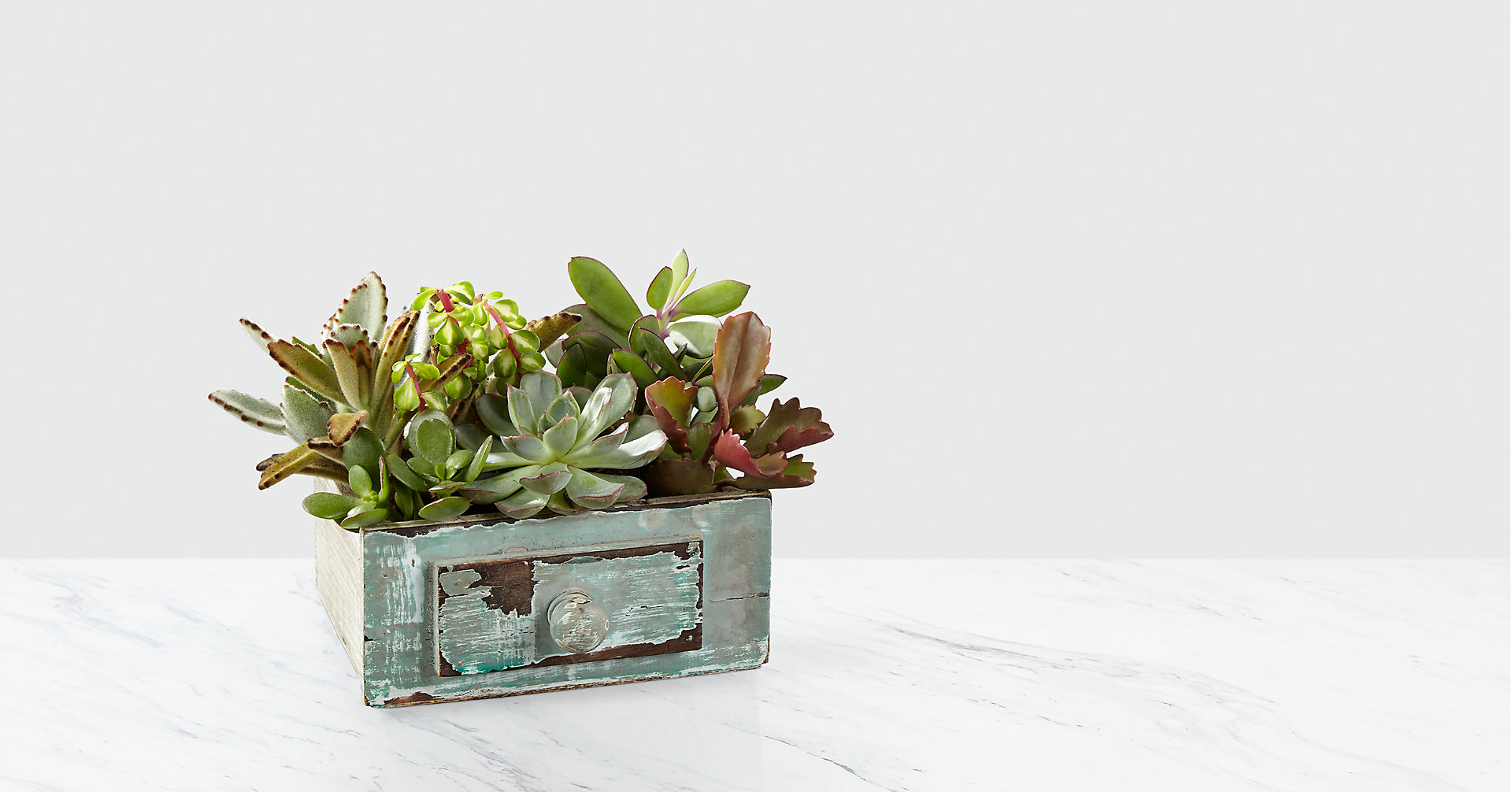 Perfect Vision Succulent Windowbox - Image 1 Of 2
