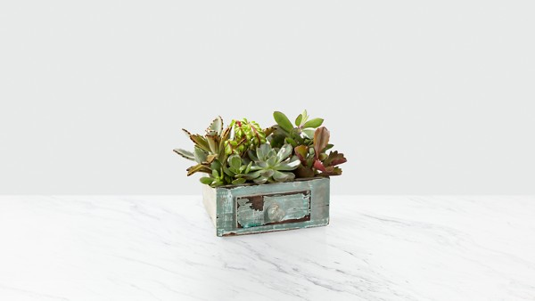 Perfect Vision Succulent Windowbox - Thumbnail 1 Of 2