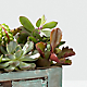 Perfect Vision Succulent Windowbox - Thumbnail 2 Of 2