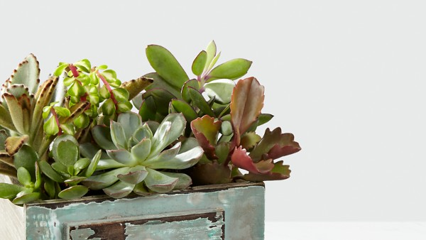 Perfect Vision Succulent Windowbox - Image 2 Of 2