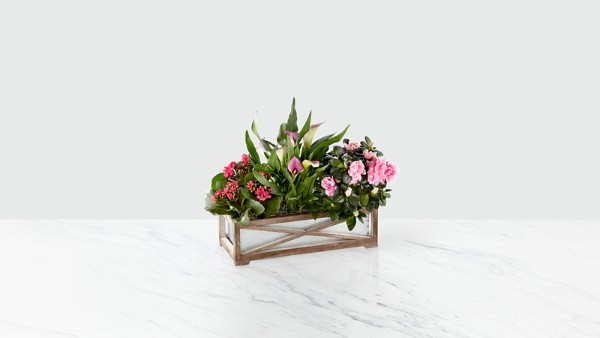 Farmhouse Charm Windowbox