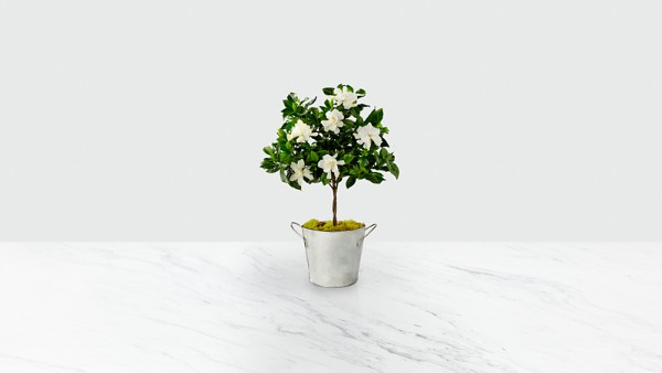 Pure & Simple Gardenia Topiary