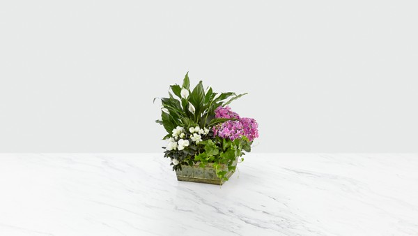 Be Inspired Blooming Basket - Image 1 Of 2