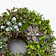Living Succulent Wreath - Thumbnail 2 Of 2