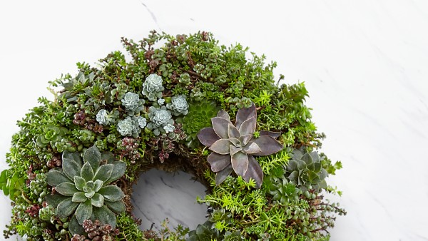 Living Succulent Wreath - Image 2 Of 2