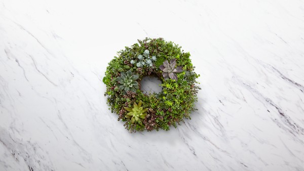 Living Succulent Wreath - Thumbnail 1 Of 2
