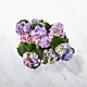 Deep Twilight Hydrangea - Thumbnail 2 Of 3