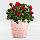 Potted Red Roses - Thumbnail 1 Of 2