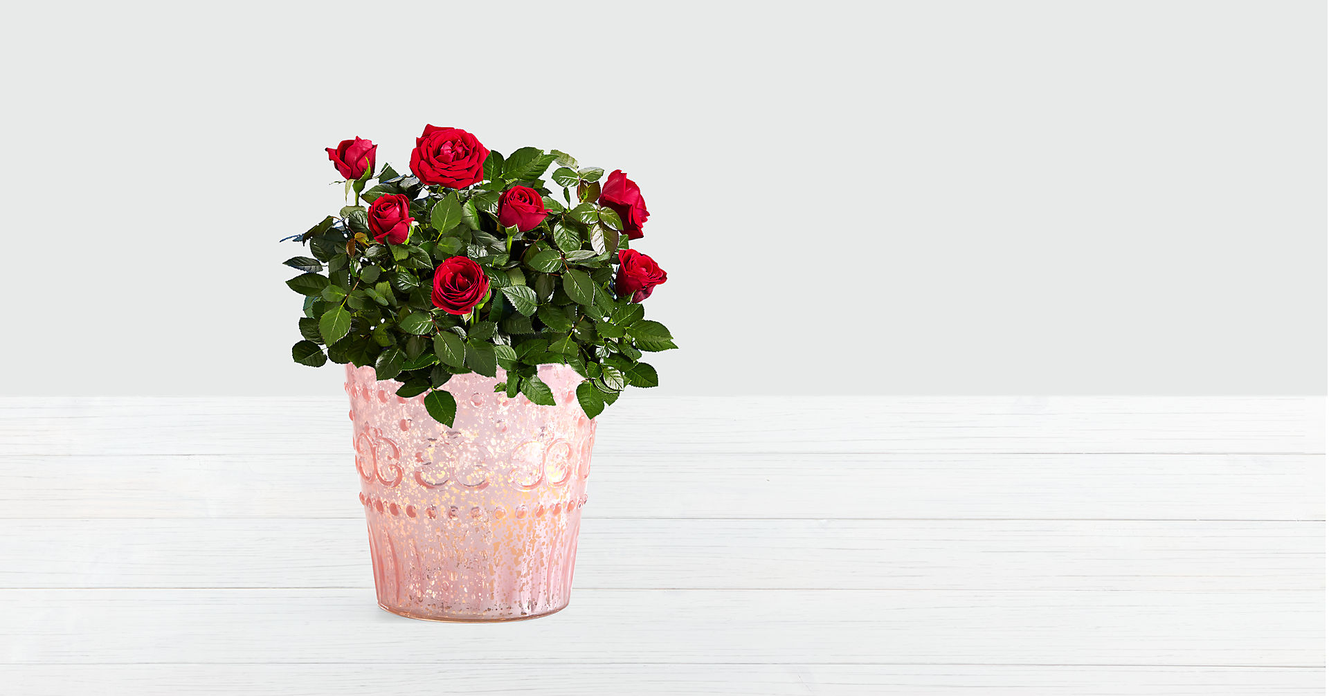 Potted Red Roses - Image 1 Of 2
