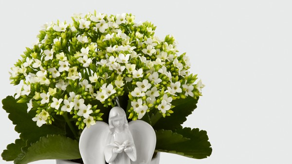 Angel Inspirations Kalanchoe Plant - Image 2 Of 2