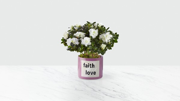 Faith Hope Love Azalea - Thumbnail 1 Of 2
