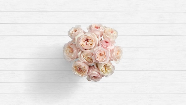 Tahiti Coast - 12 Stems of Blush Pink Garden Roses