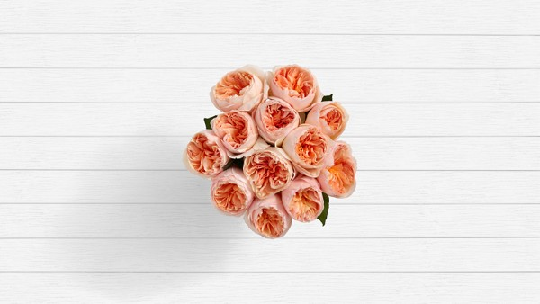 Honolulu Hues - 12 Stems of Peach Garden Roses