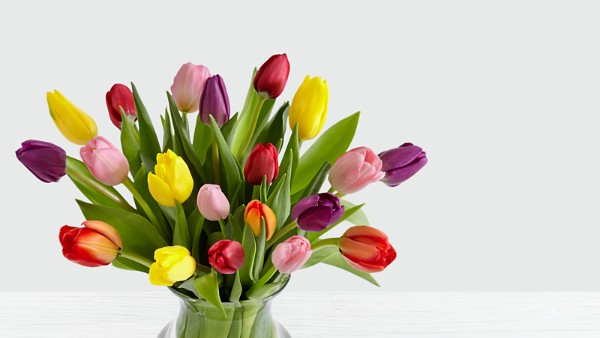 20 Multi-Colored Tulips - Image 3 Of 5