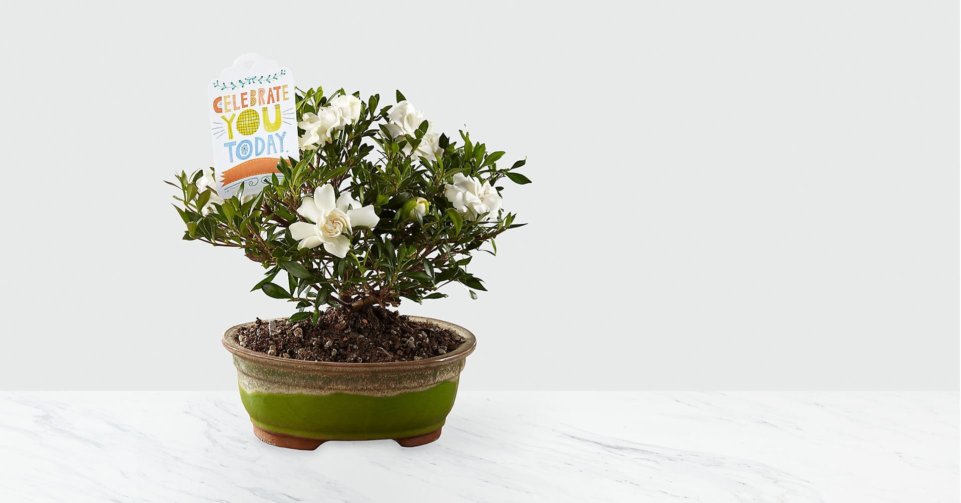 Celebrate You Gardenia Bonsai by Hallmark - Image 1 Of 2