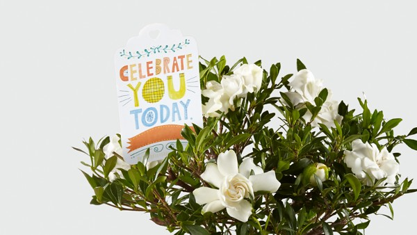 Celebrate You Gardenia Bonsai by Hallmark - Image 2 Of 2
