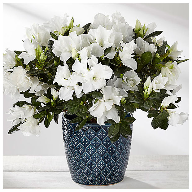 Savor Every Moment Azalea -Blue & White