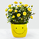 Sending a Smile Mini Rose Plant - Thumbnail 1 Of 2
