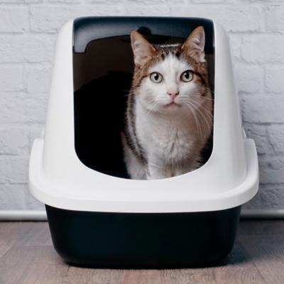Higiene, Baños y Arena para Gatos