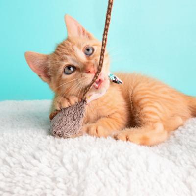 Accesorios, Juguetes y Collares para Gatos