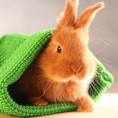 Conejos y Hamster