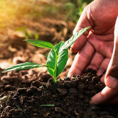 Tierras , Semillas y fertilizantes