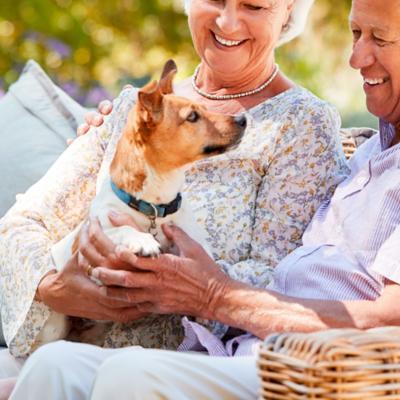 Arnés, Collares y Ropa para Perros