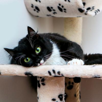 Gateras y Rascadores para Gato