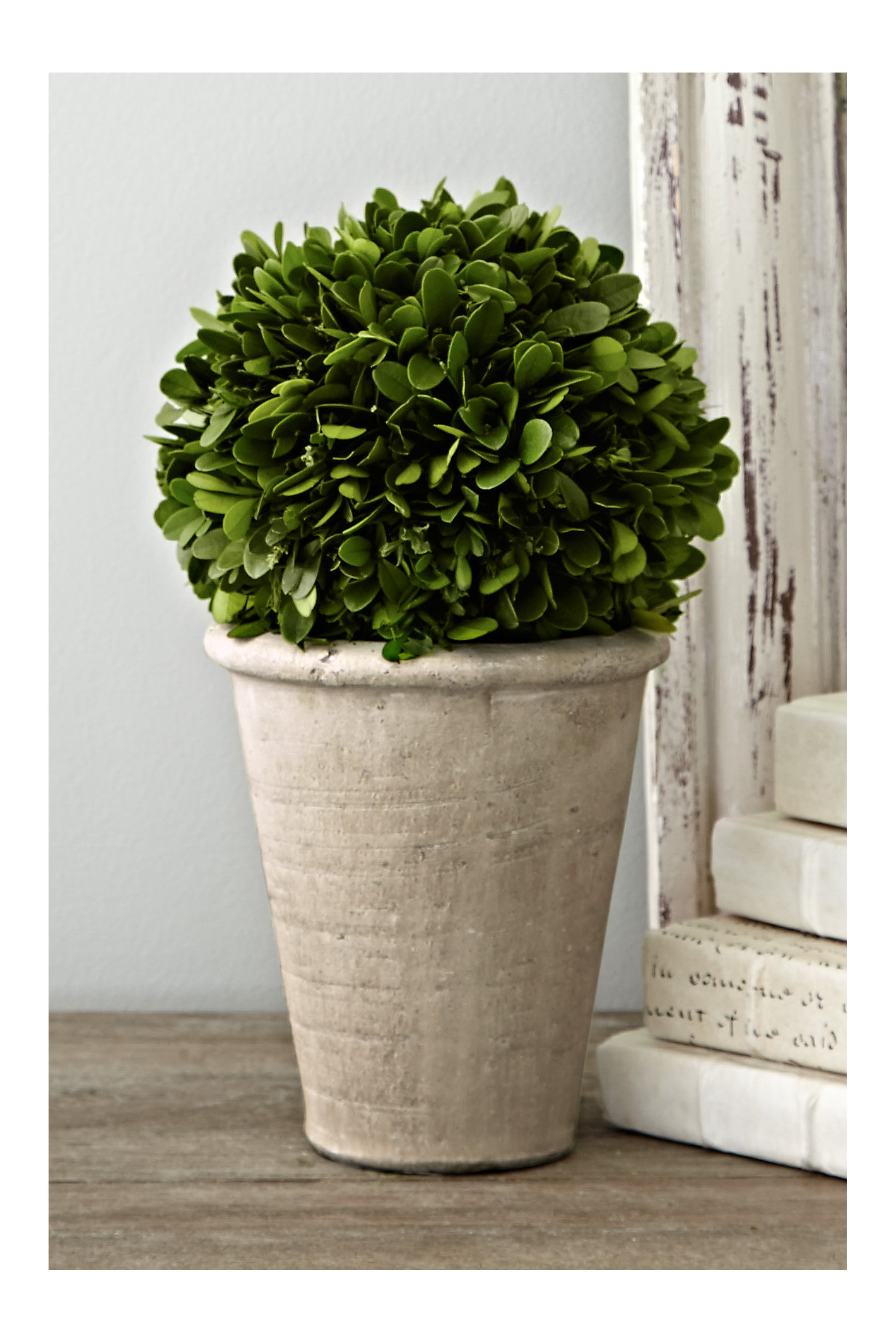 Potted Boxwood Collection