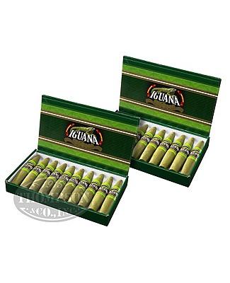 Iguana 2-Fer Candela Perfecto