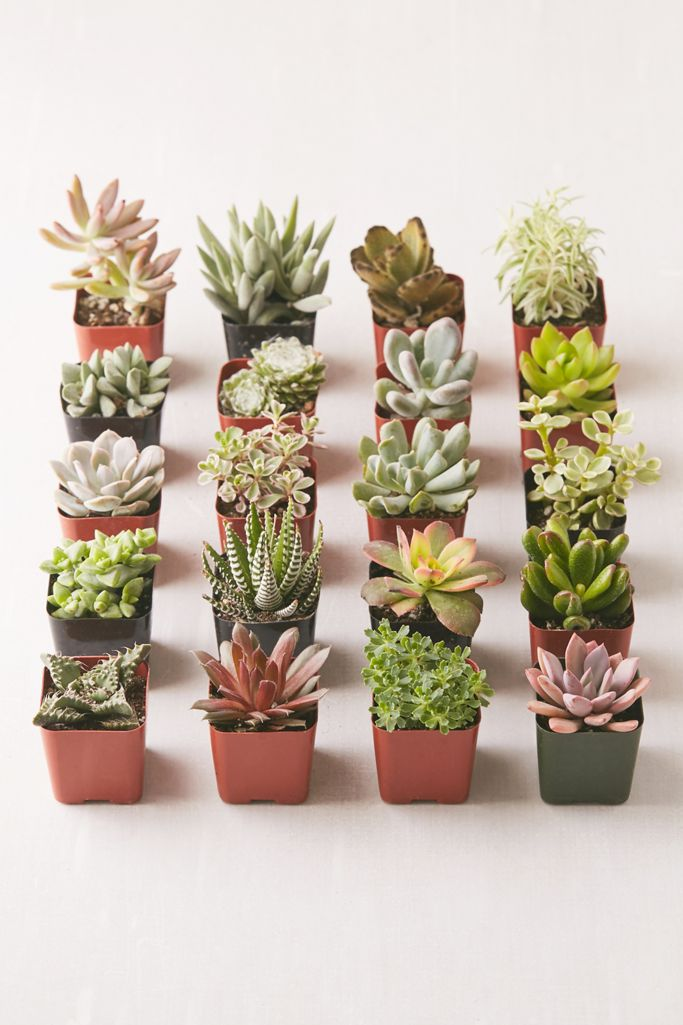 2 Live Assorted Succulents Set Of 20 Urban Outfitters