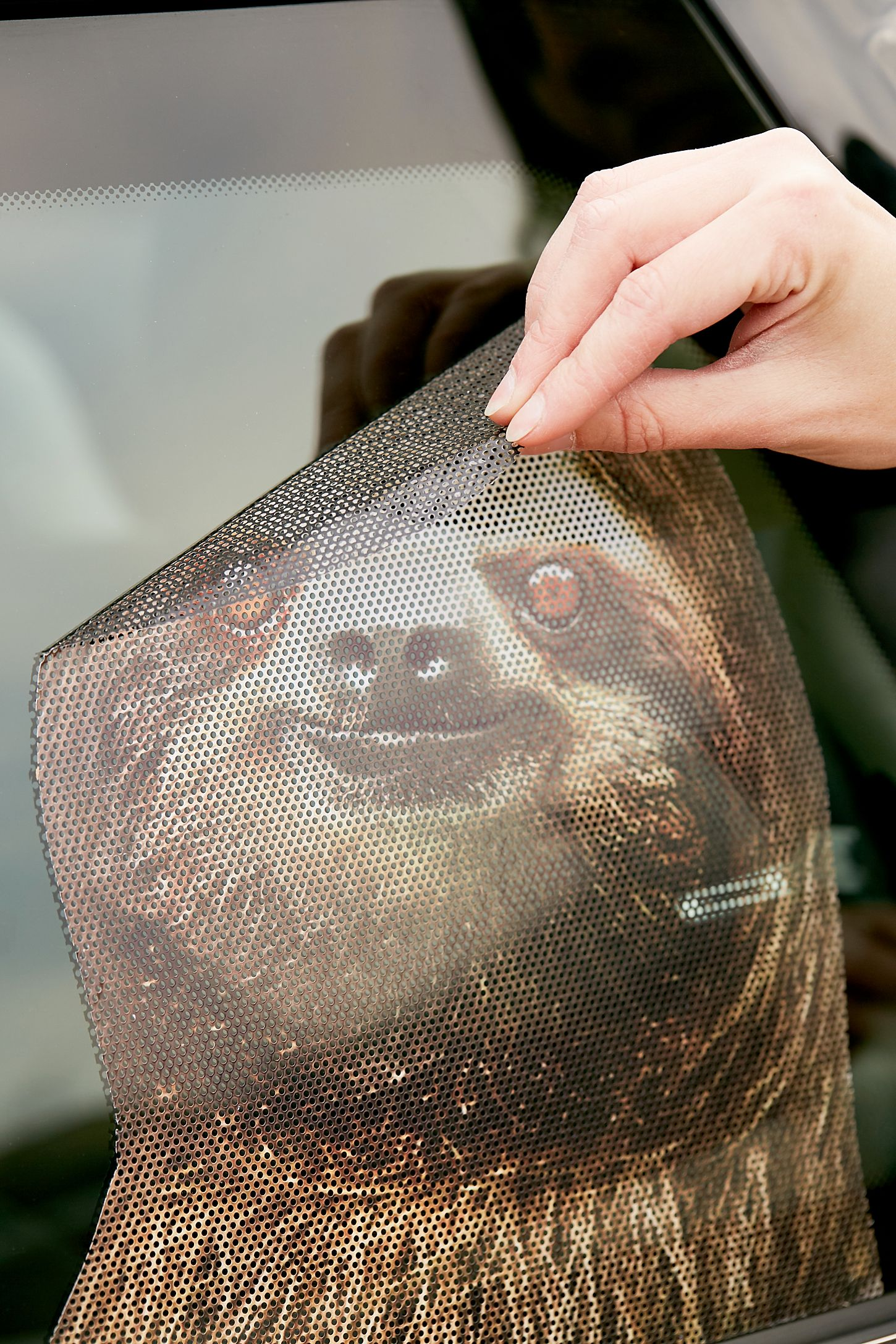 Slide view 2 sloth car decal