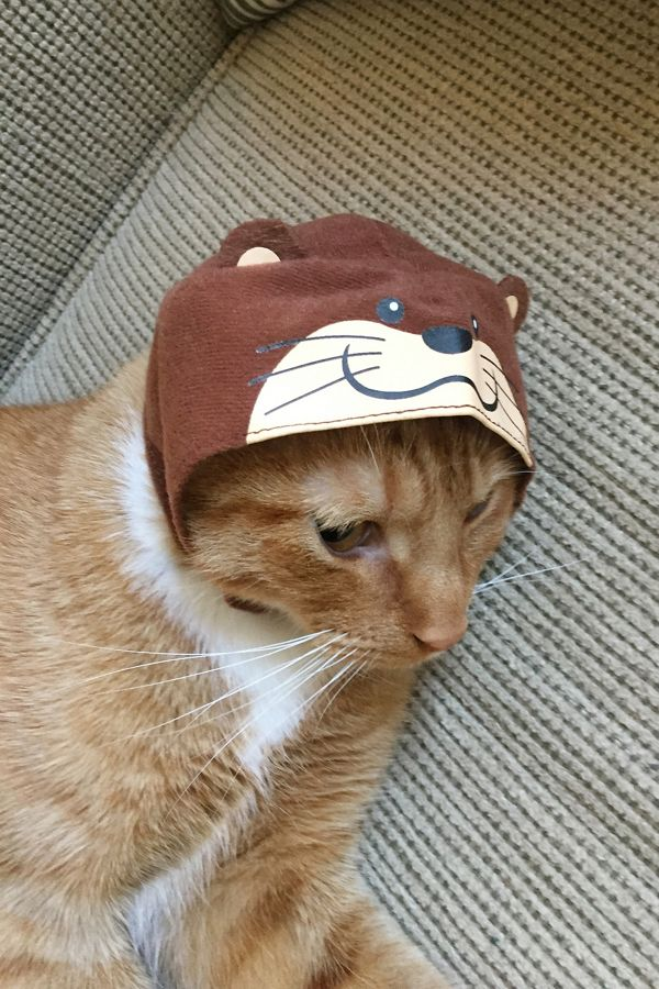 59192e42edcfd Cat Cap